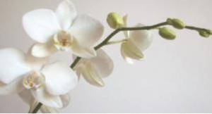 flower_0